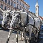Pferde vor Kutsche, Wien