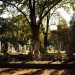 Kreuze auf dem Wiener Zentralfriedhof